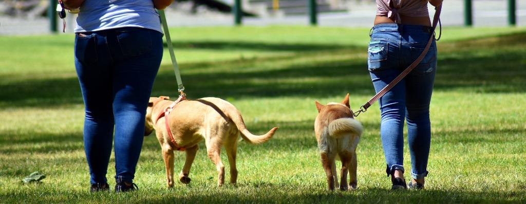 Invita a raccogliere i bisogni del cane: donna minacciata dal padrone