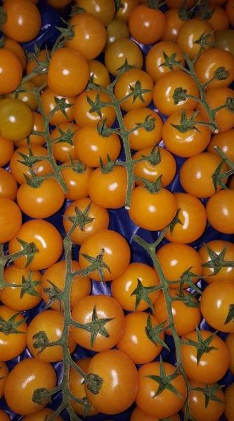 Pomodori di primissima qualità!!!