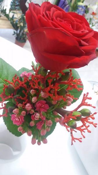 Red Naomi e Corallo