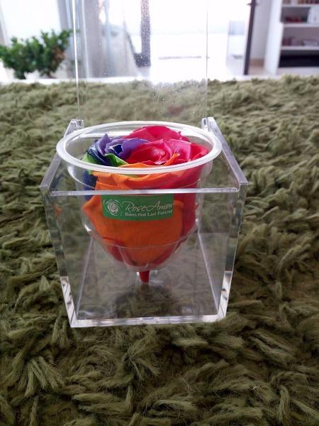 Rosa millecolori stabilizzata in cofanetto in plexiglass