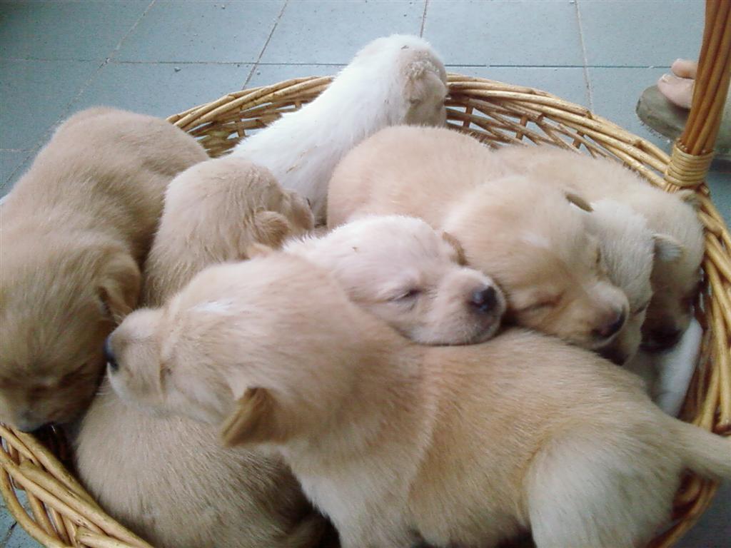 Trovati cuccioli in un sacchetto. Erano stati buttati nel fiume