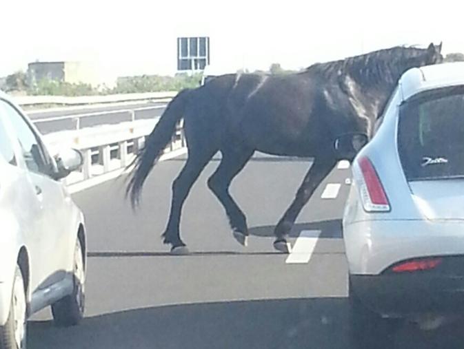 Autostada Napoli - Salerno: sul web il video di un cavallo che sfreccia tra auto e moto