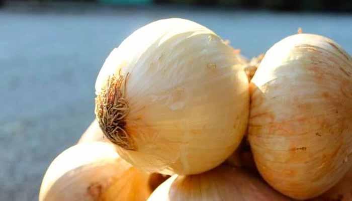 Dal 13 luglio a Vatolla torna la Festa della Cipolla
