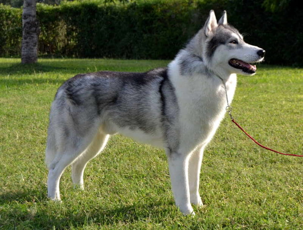 Battipaglia: cane azzanna quattro persone