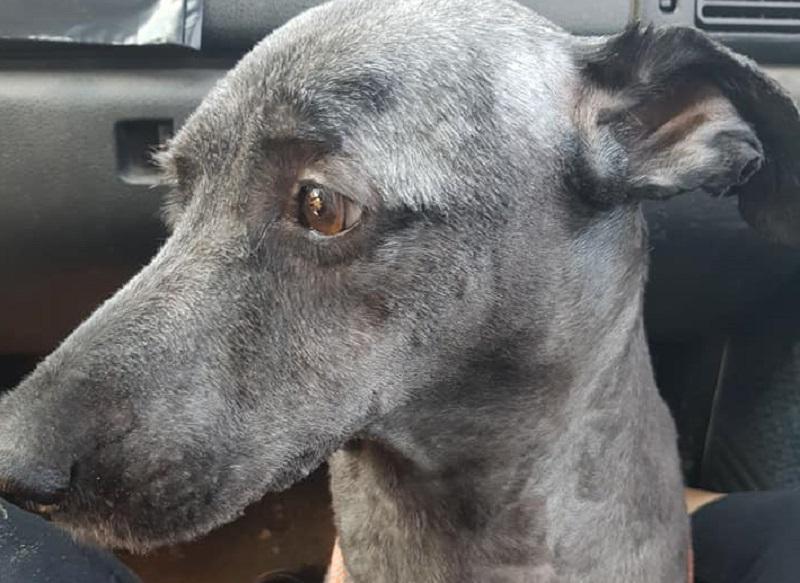 Cani impiccati e mutilati nel salernitano