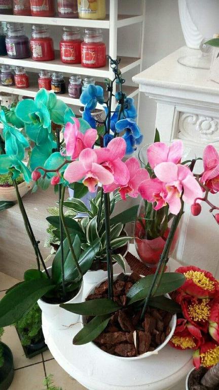 Orchidee nuovi colori disponibili