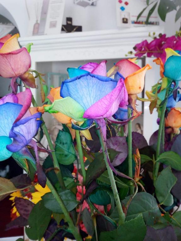 Rosa Rainbow disponibile