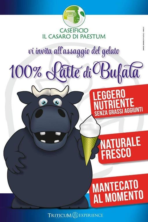 Gelato artigianale con latte di bufala
