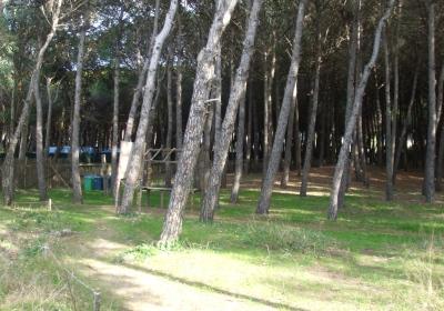 Orgia in pineta a Capaccio: denunciati 4 uomini