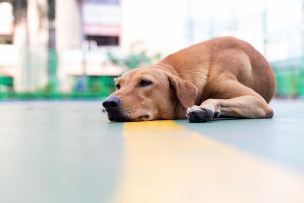 Ancora un cane morto avvelenato a Montecorvino Rovella