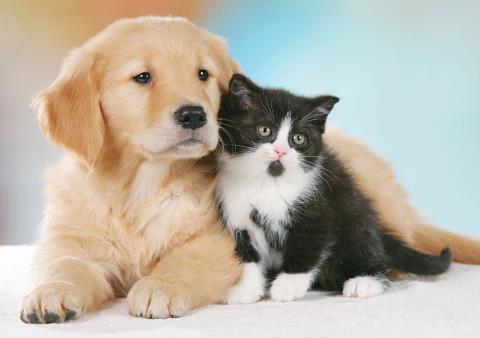 Salerno: sabato 28 e domenica 29 torna 'Un weekend da cani... e gatti'